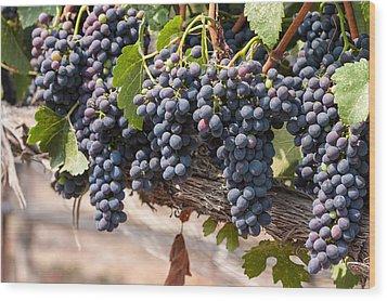Hanging Wine Grapes Wood Print by Dina Calvarese