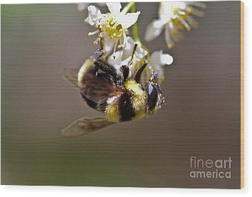 Hanging With The Bumble Bee Wood Print by Mitch Shindelbower