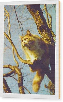 Hanserelli In Tree Wood Print by Barbara McGeachen