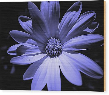 Happy African Daisy In Blue Wood Print by Beth Akerman