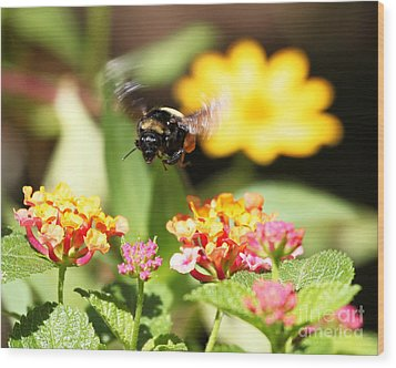 Wood Print featuring the photograph Happy Bee by Luana K Perez