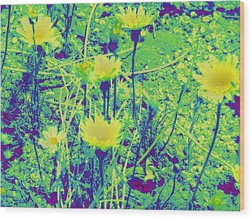 Happy Desert Daisies Wood Print by Claire Plowman