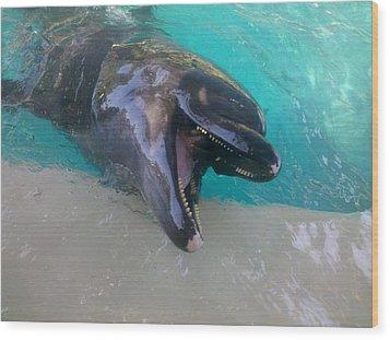 Happy Dolphin Wood Print by Tammy Herrin