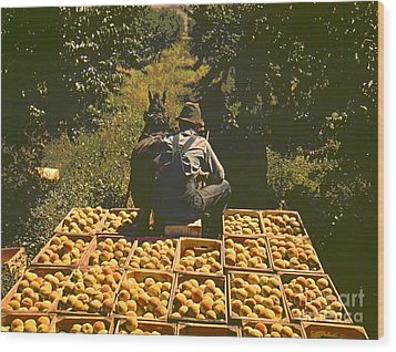 Hauling Crates Of Peaches Wood Print by Padre Art