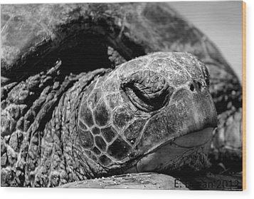 Hawaiian Basking Turtle Wood Print by Elizabeth  Doran