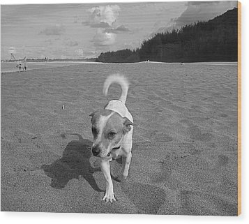 Hawaiian Beach Dog Wood Print