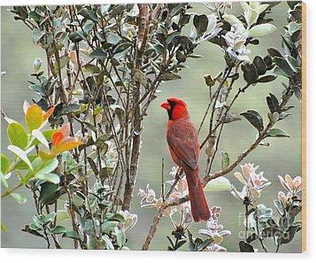 Hawaiian Cardinal  Wood Print by Johanne Peale