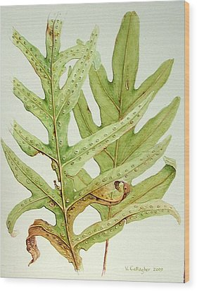 Hawaiian Lauae Ferns Wood Print by Vincent Callagher