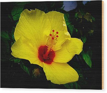 Wood Print featuring the photograph Hawaiian Yellow Hibiscus by Athena Mckinzie