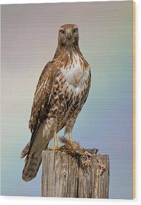 Hawk And Rainbow Wood Print