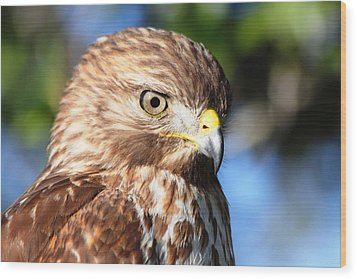 Wood Print featuring the photograph Hawk In Viera Florida by Jeanne Andrews