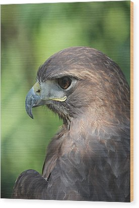 Hawk Profile Wood Print by Alexander Spahn