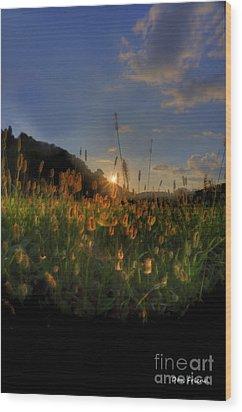 Hay Field Wood Print by Dan Friend