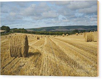 Hay Field Wood Print by Donald Davis