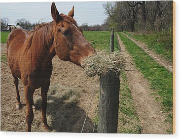 Hay Is For Horses Wood Print by Bill Cannon