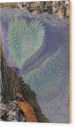Wood Print featuring the photograph Heart Of The Tide Pool by Mick Anderson