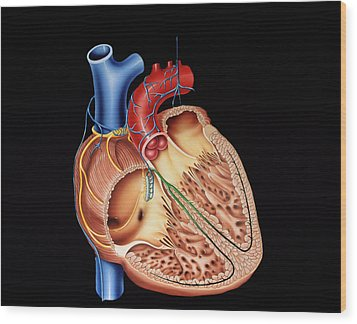 Heart Structure Wood Print by Francis Leroy, Biocosmos