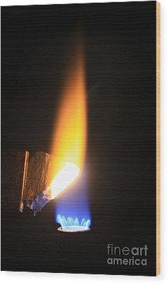 Heating Lime Limelight Wood Print by Ted Kinsman