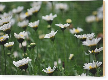 Wood Print featuring the photograph Heavenly Daisies by Amee Cave