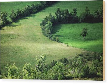 Hedged Farmland Wood Print by Photo Marylise Doctrinal