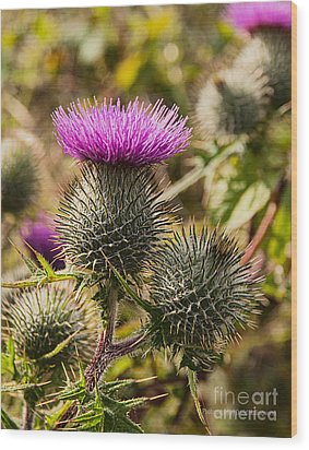 Hedgerow 2 Thistle Wood Print