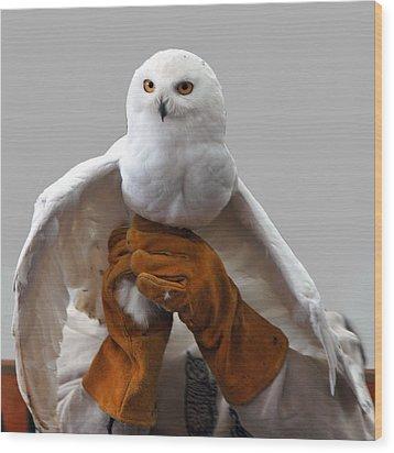 Hedwig Harry Potters Pet Wood Print by LeeAnn McLaneGoetz McLaneGoetzStudioLLCcom