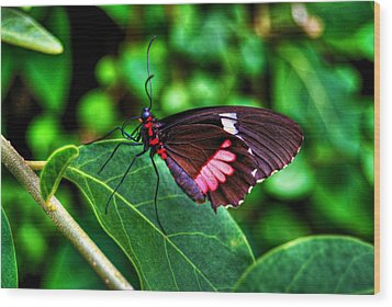 Hello Flutterby Wood Print by Randy Aveille