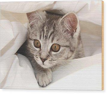 Hello Kitten Wood Print by Claudia Moeckel