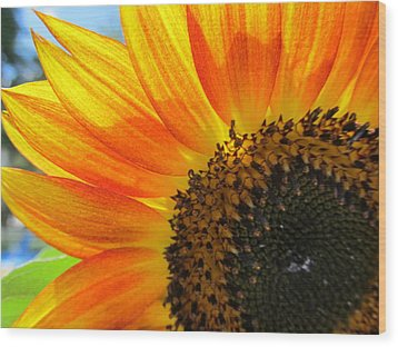 Wood Print featuring the photograph Hello Sunflower by Tina M Wenger