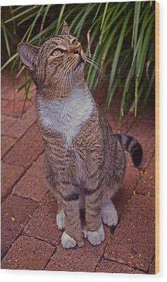 Hemingway House 6 Toed Cat 01 Wood Print by George Bostian