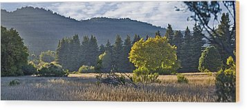 Henry Cowell Meadow Sunset Wood Print by Larry Darnell
