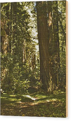 Henry Cowell Redwoods Late Summer Afternoon Wood Print by Larry Darnell