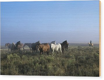 Herd Of Horses And Cowboy On Horseback Wood Print by Natural Selection Craig Tuttle