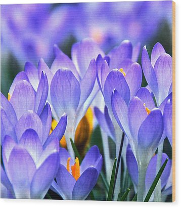 Here Come The Croci Wood Print by Byron Varvarigos