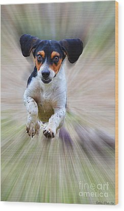 Here I Come Wood Print by Debbie Portwood