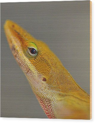 Wood Print featuring the photograph Here Lizard Lizard by Tanya Tanski