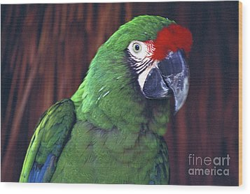 Wood Print featuring the photograph Here's Looking At You Military Macaw Riviera Maya Mexico by John  Mitchell