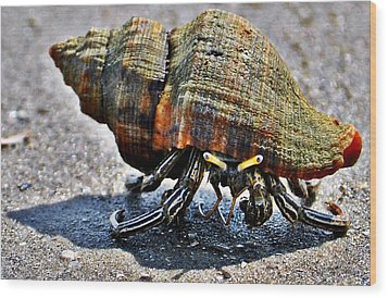 Wood Print featuring the photograph Hermit Crab by John Collins