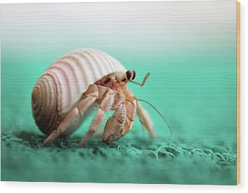 Hermit Crab Running Wood Print by With love of photography
