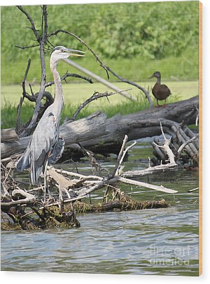 Wood Print featuring the photograph Heron And Mallard by Debbie Hart