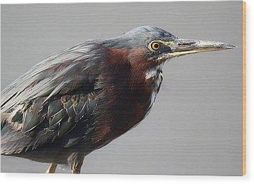 Heron Close Up Wood Print by Paulette Thomas