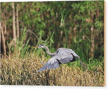Heron Flying Along The River Bank Wood Print