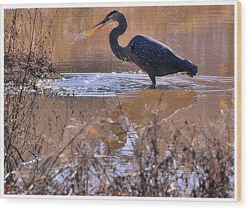 Heron Head Shake - C3136u Wood Print by Paul Lyndon Phillips