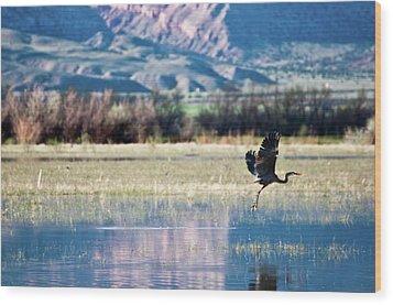 Heron In Flight Wood Print by Harpazo_hope