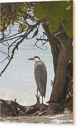 Heron Wood Print by Jane Rix