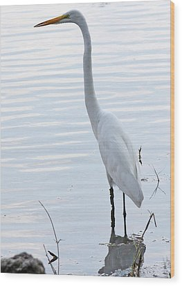 Heron Reflection Wood Print by Becky Lodes