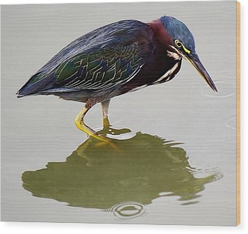 Heron Reflection Wood Print by Paulette Thomas