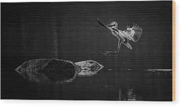 Heron's Land Wood Print by Brian Young
