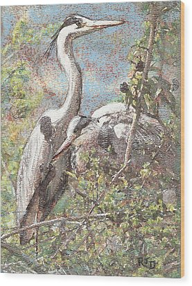 Herons Resting Wood Print by Richard James Digance