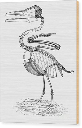 Hesperornis Wood Print by Science Source